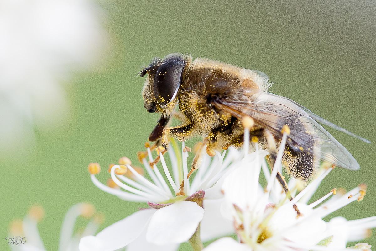 Zzzz'abeille + correction 413284IMG6219