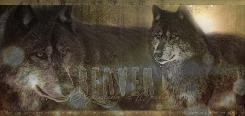 Chanson thème de votre loup! 413946REAVENSIGNA