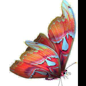 Tubes Papillon 418262Melgibson4e14