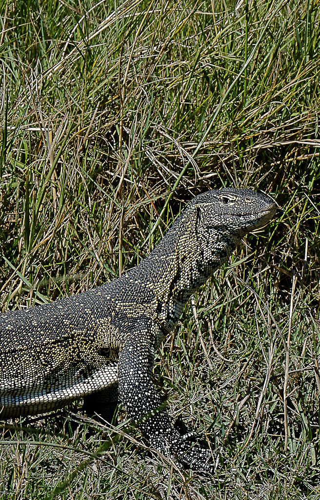 [Fil ouvert à tous] Reptiles, serpents, tortues, amphibiens, ... - Page 2 419725140520151405201914052019AFR3577DxO2