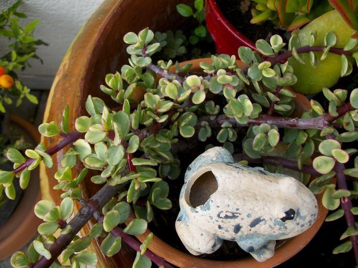 Plante grasse  C QUOI 421139PLANTEGRASSE