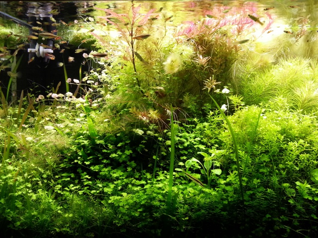 Mes (plus) de 60 plantes dans mon 240 litres - Page 3 42124820140412065504