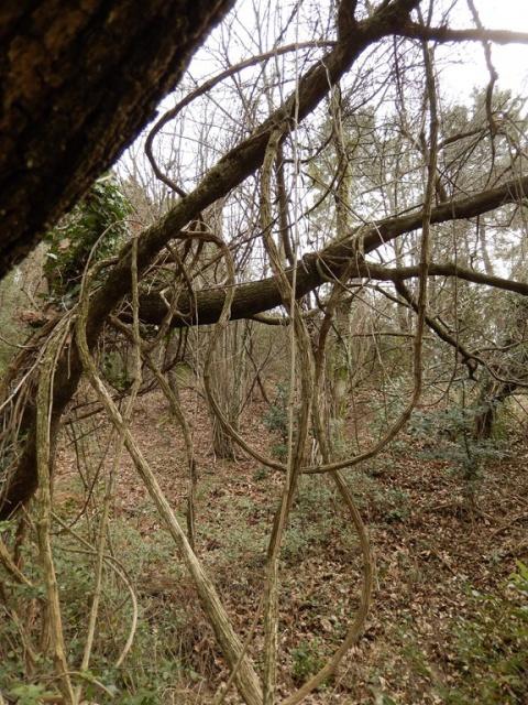 Petite ballade à travers bois... 425148DSCN0069Copier