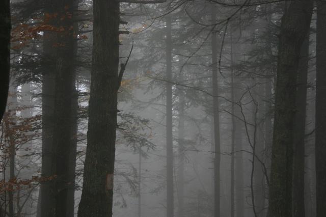 Dans la brume éléctrique sans gibier à l'horizon... 425381IMG4581