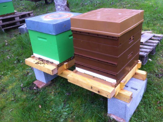 Essaim artificiel avec plusieurs ruches 426133IMG1622