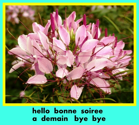 Bon Jeudi 426795Grandefleurrose