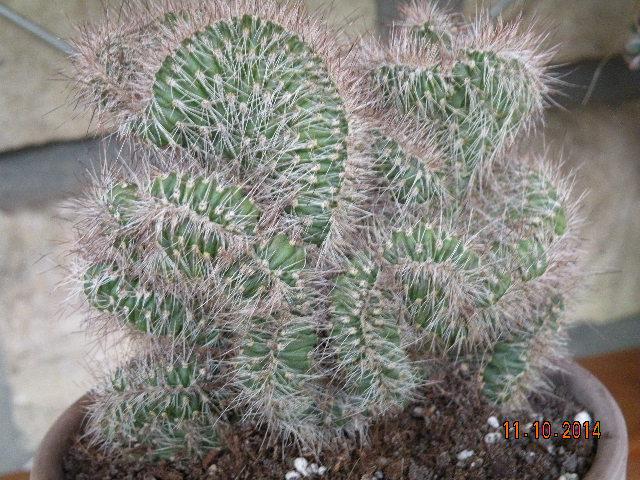Aujourdui c'est rempotage de mes cactus! :) 428054DSCN1292