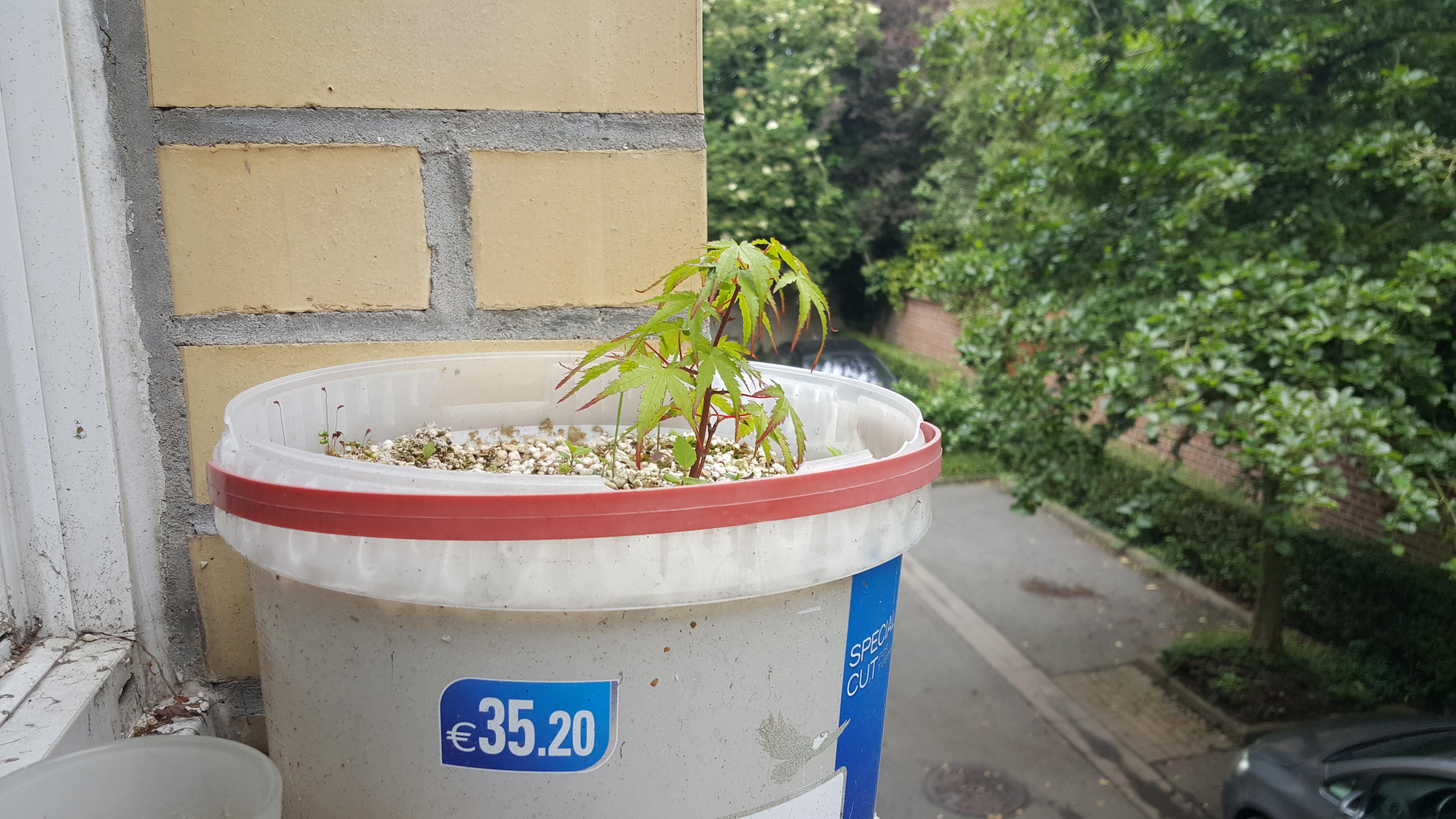 le bassin floral d'été de mes anodonte et moules naine - Page 6 43232320160619131212