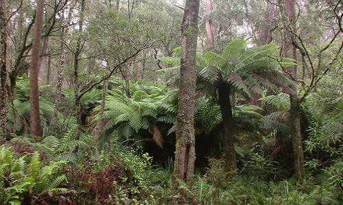 Forêt Tropicale