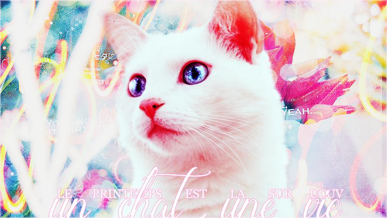 Un chat, une vie