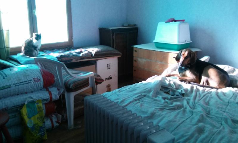 DUCHESSE - chatte femelle, née 2011/2012, borgne - (PASCANI) - adoptée par Chantal Pascal (dpt 63) - Page 4 43642420151203113951