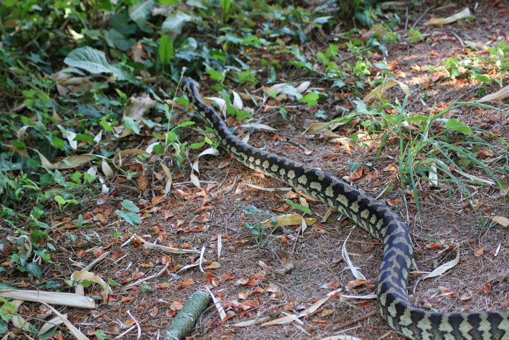Journée internationale des serpents 437489t20151r
