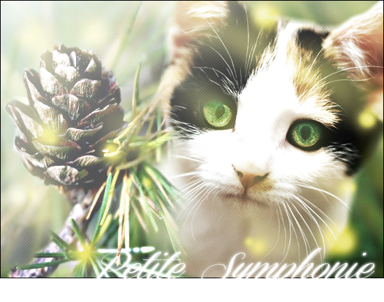 Lily || Graphisme || Ouvert ♦ 439250Synphoniend