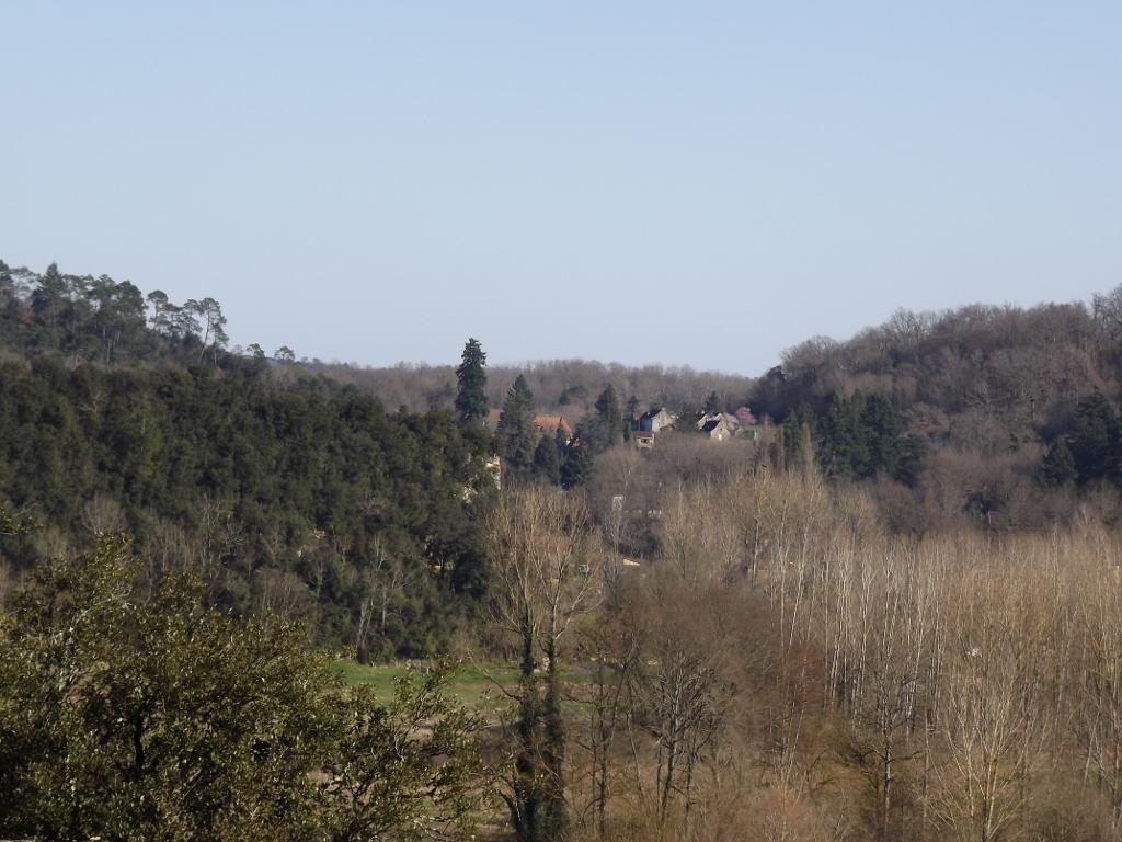 Quercus ilex - chêne vert 444941DSCF51341024x768