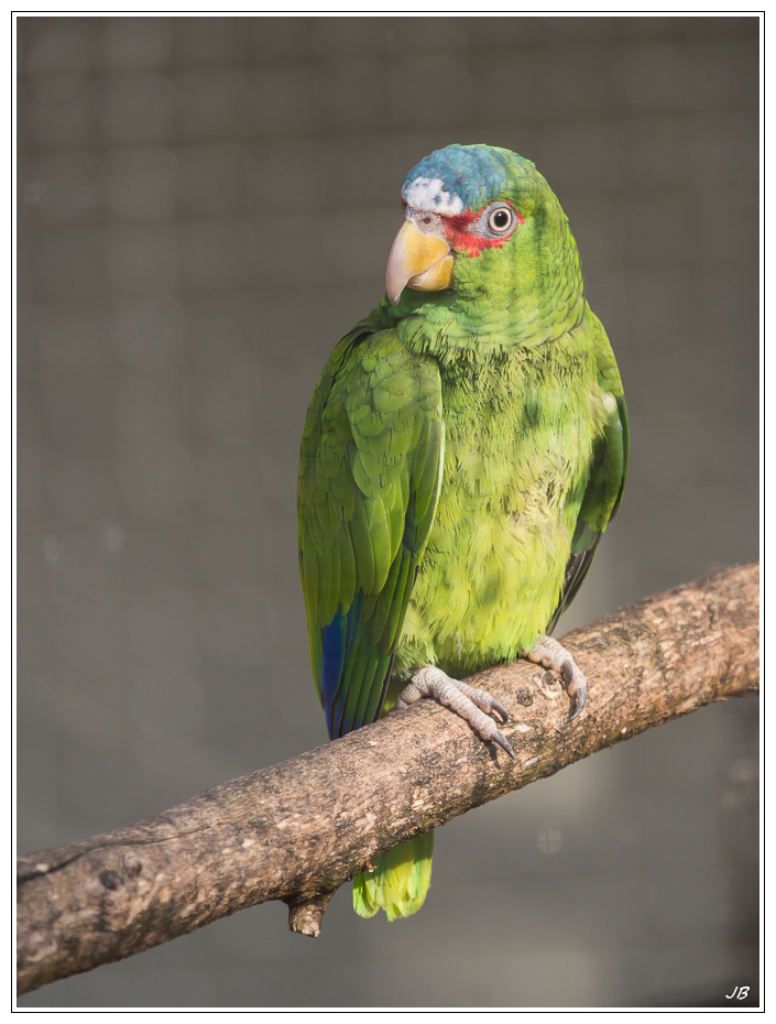 Zoo de Beauval : les oiseaux 448866LR53P1140057