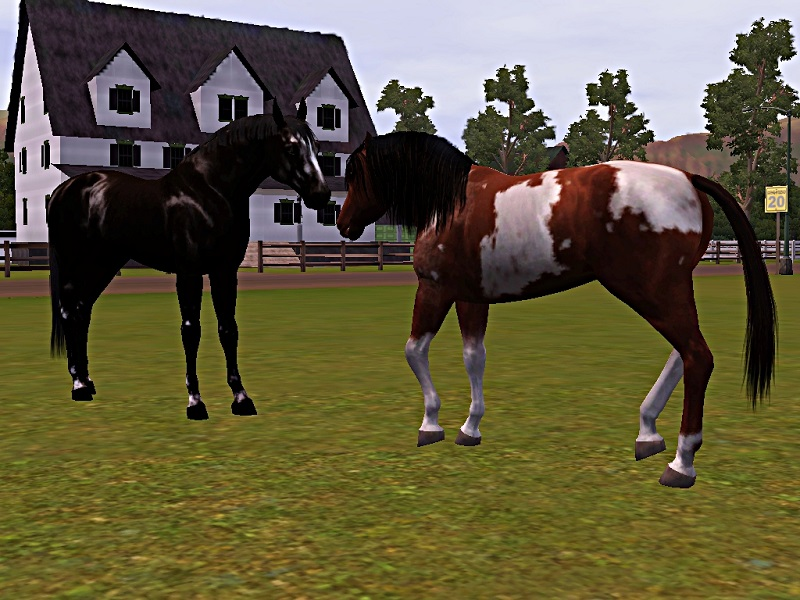 "[Challenge] Teens and Horses ""Sims 3"" - Page 3 450052polkarencontredeschevauxsauvages"
