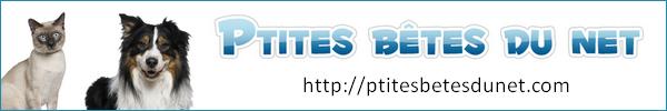 Devenir partenaire avec Ptites bêtes du net  453494Banniereamis2