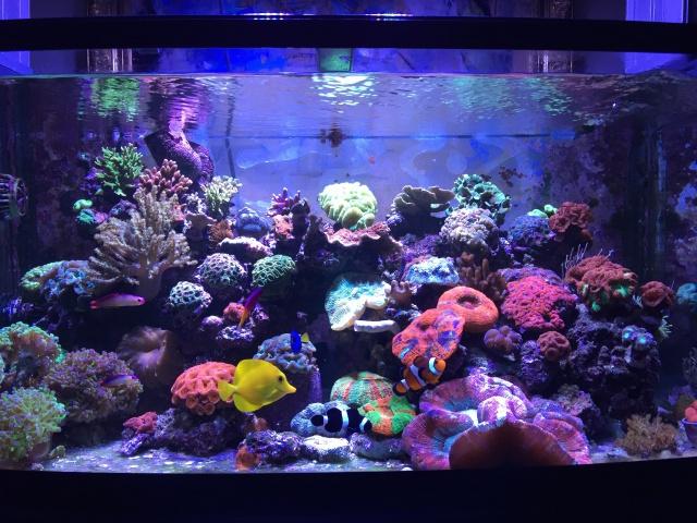 Le reef de Moule92 - Page 4 454709IMG2088