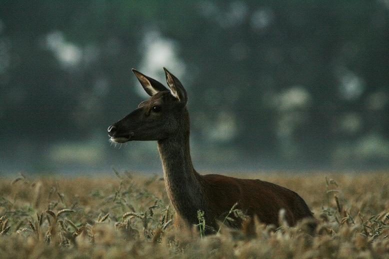 Belles photos d'animaux c'est ici !  - Page 9 455714MG8601Copie