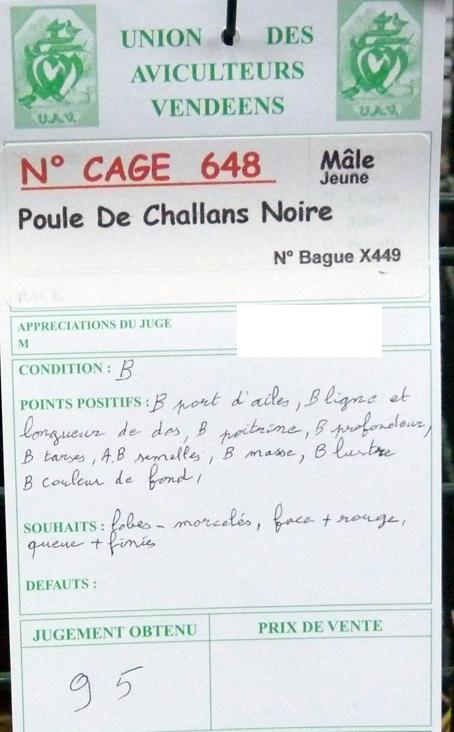 poule - Poule de Challans - standard 455792P1120301