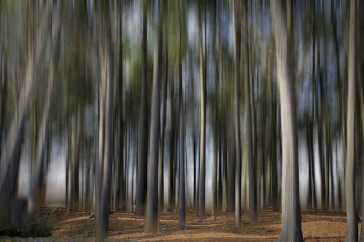 [fil ouvert] la forêt dans tous ses états - Page 3 456172024