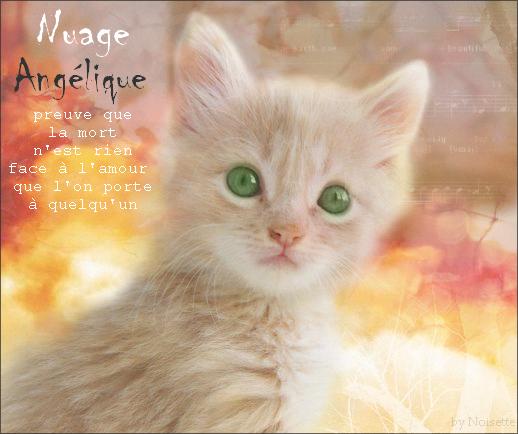 Fleur de Nuage du Clan Céleste - Page 2 456333NuageAnglique