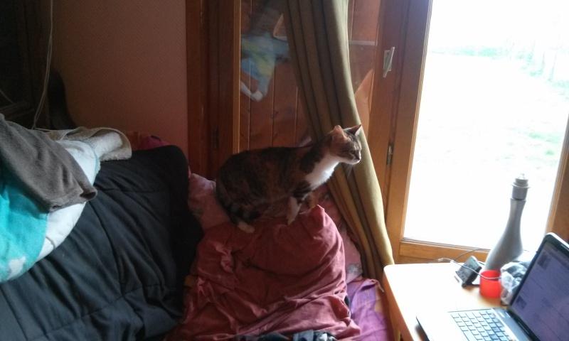 DUCHESSE - chatte femelle, née 2011/2012, borgne - (PASCANI) - adoptée par Chantal Pascal (dpt 63) - Page 4 4565326961