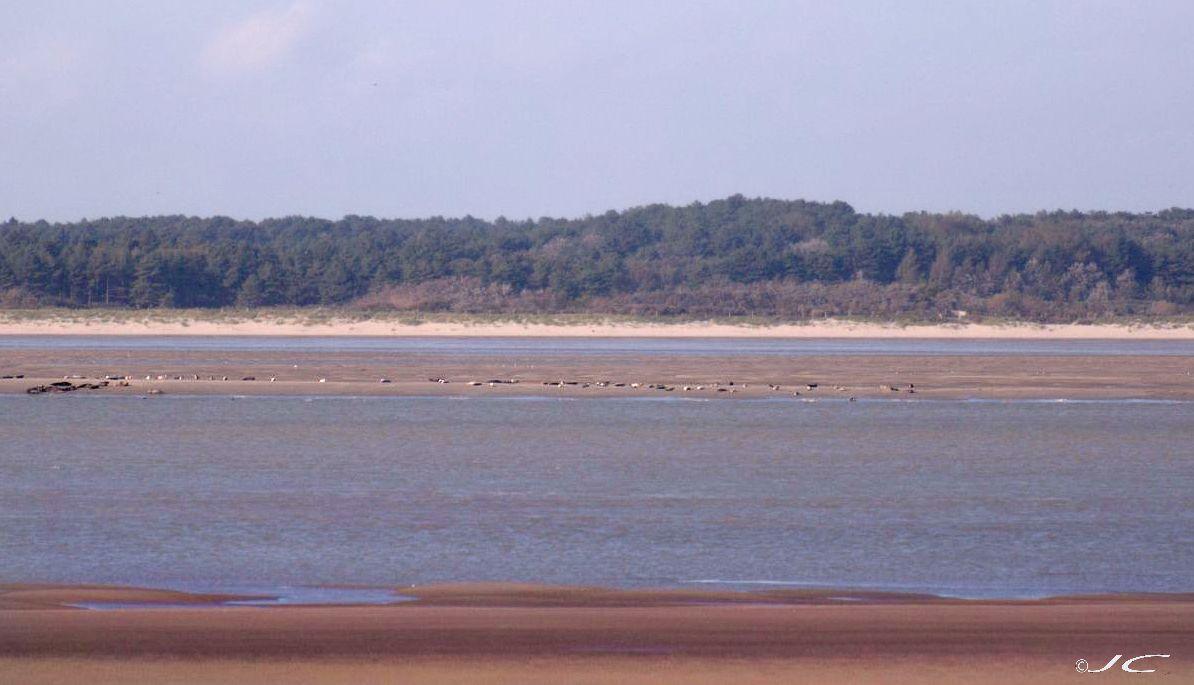 Un peu partout en Picardie et haute Normandie 458993phoques