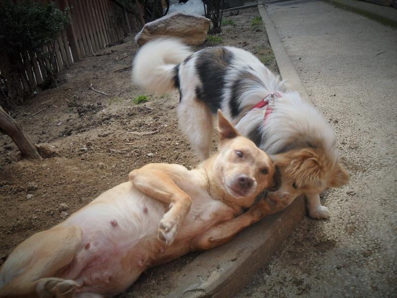 Tina, chienne sauvée de la rue, née en avril 2010  459521TinaetLacy01dbutmars2015