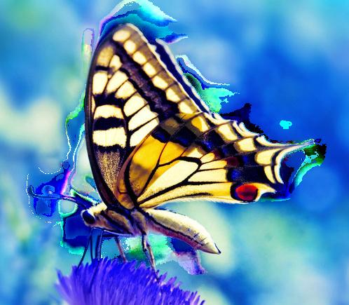 Tubes Papillon 461020Melgibson4ge10