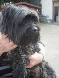 Vol de chien à la SPA de St Omer 461950WEBCHEMIN942601322141549