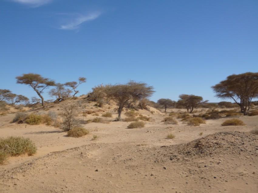 Le Grand Sud du Maroc - II 463816067