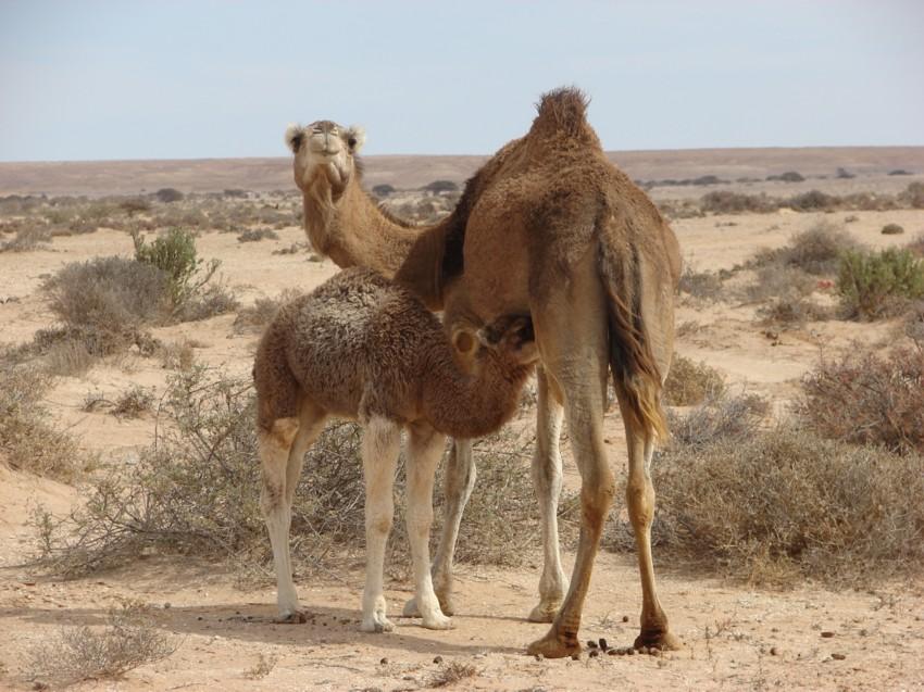 Le Grand Sud du Maroc - II 465068042