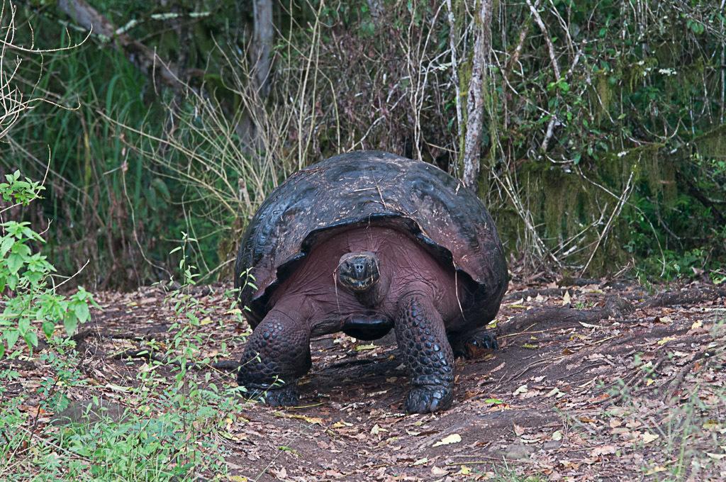 [Fil ouvert à tous] Reptiles, serpents, tortues, amphibiens, ... - Page 2 465824Galapagos709