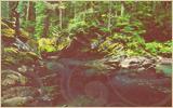 » Le ruisseau