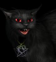 Miaou <3