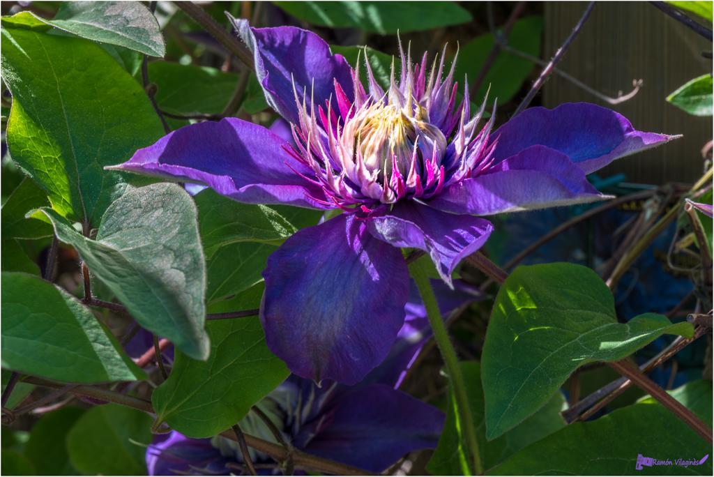 Ce matin dans mon jardin... 467969D750094ModifierSmeac