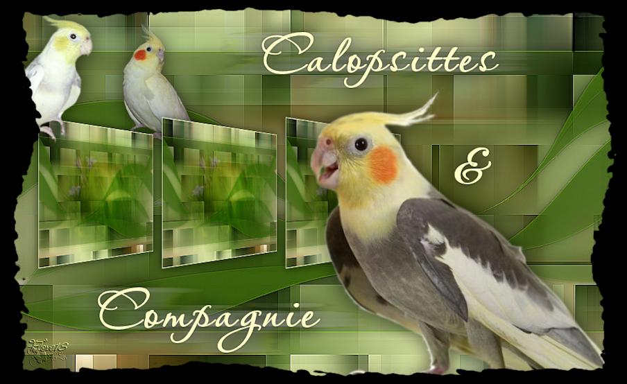 CALOPSITTES & COMPAGNIE