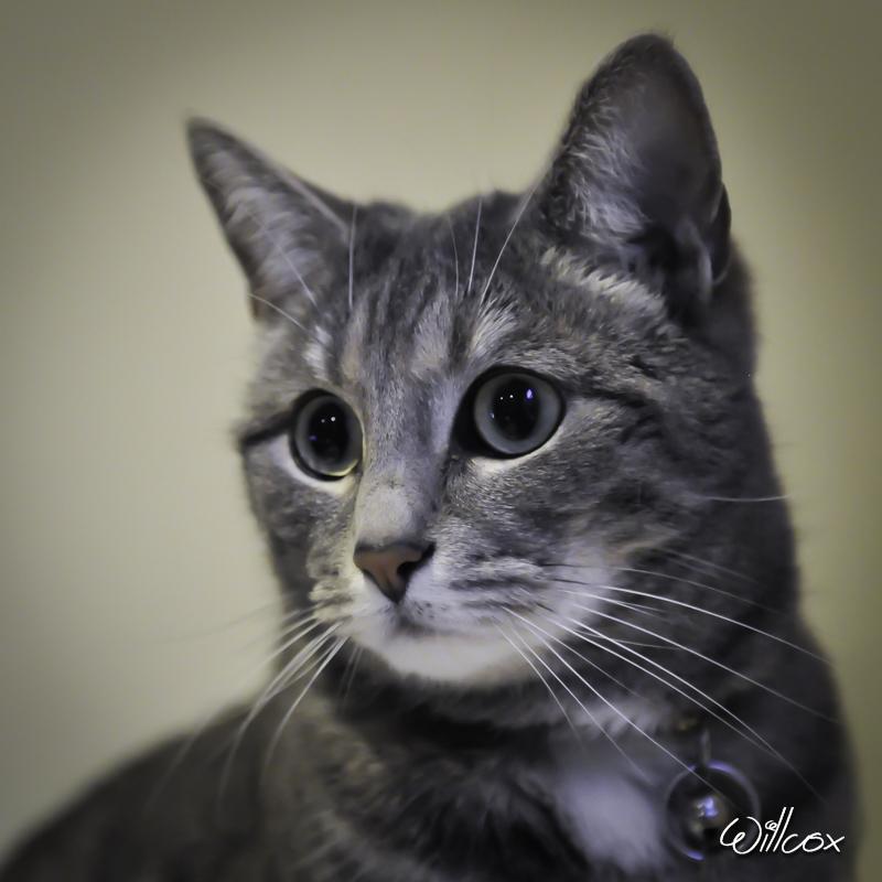 [fil ouvert] Les chats  470869Dmon1