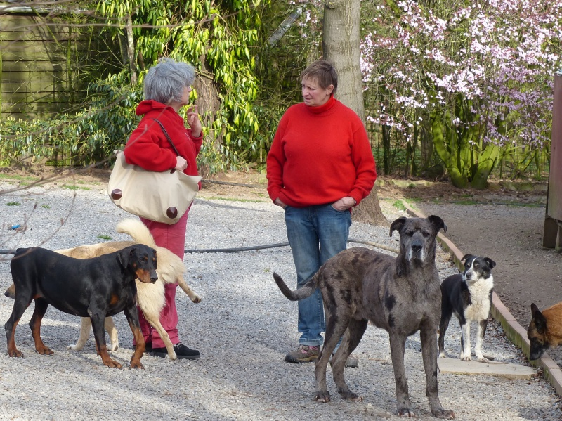 Pongo, chien des rues, né en 2009, très affectueux !! 471367P1080313