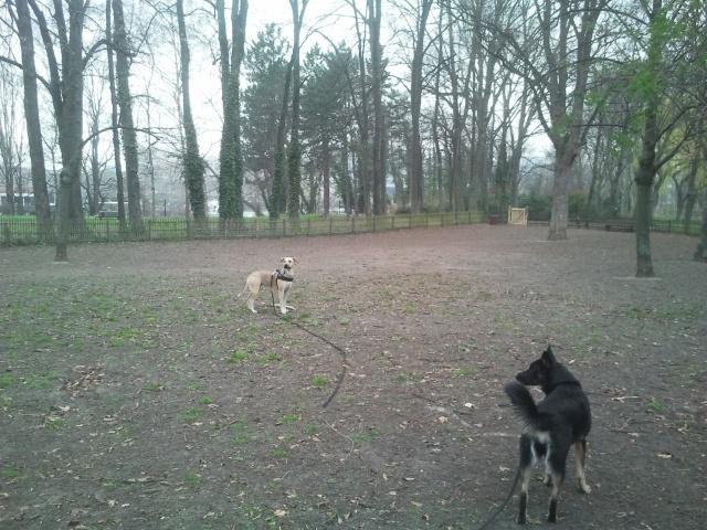 Lila, adorable chienne croisée, née en octobre 2011 472345caniparc2