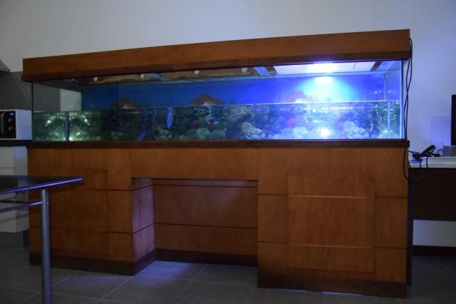 Le nouveau bac du Poissonpané : aquaterrarium de 900L / Nouvelle Calédonie 472573DSC0758