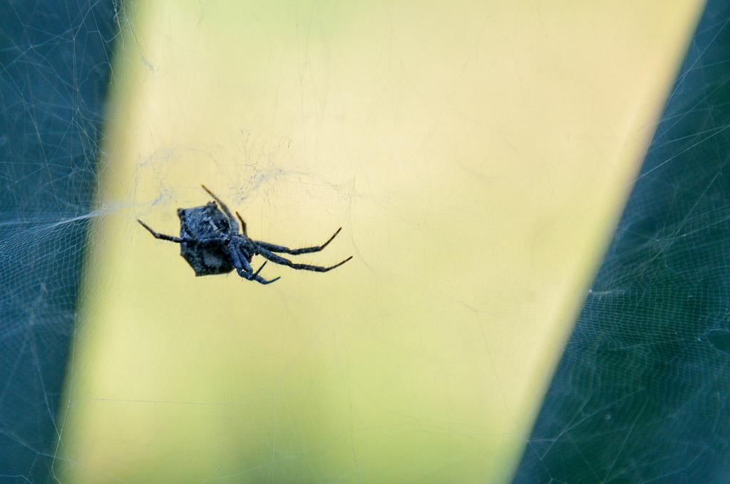 (FIL OUVERT à tous) vous aimez les araignées? 473789DSC80271311111727522
