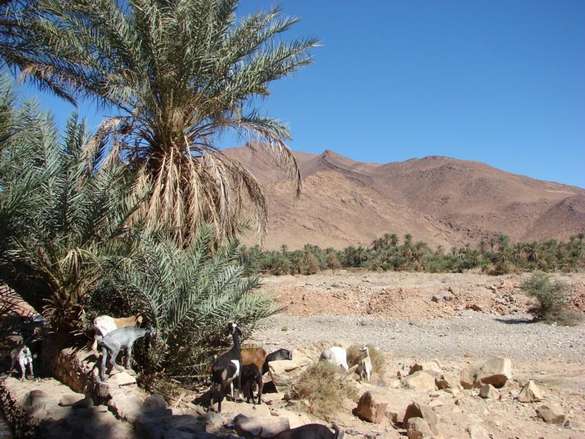 retour Maroc octobre 2013 - Page 2 486315073