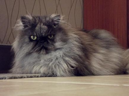 Je vous présente mon chien et mon chat ^^ 4870183