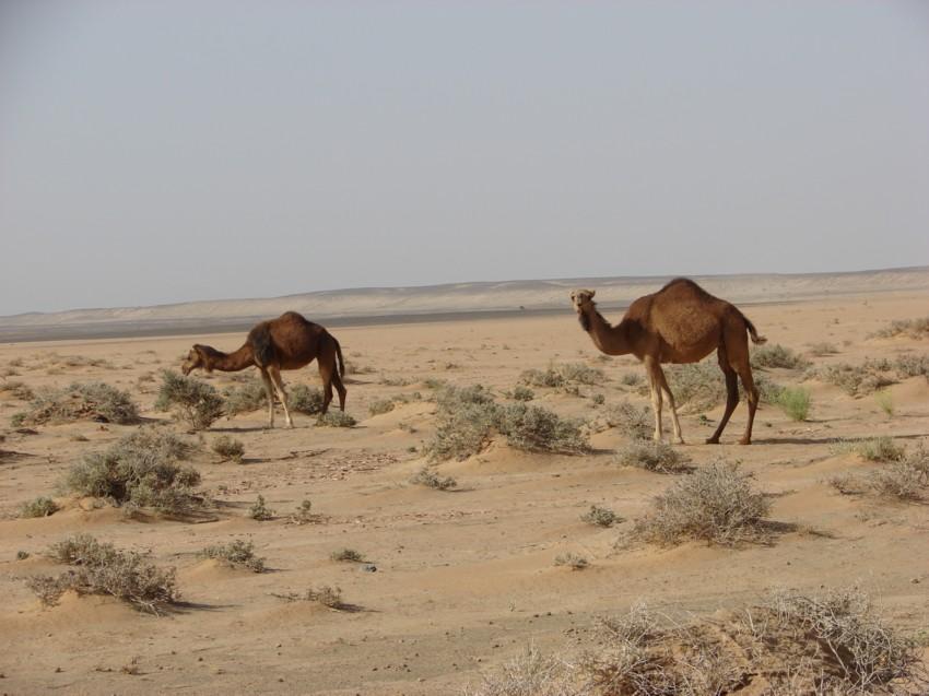 retour maroc avril 2013 487845031