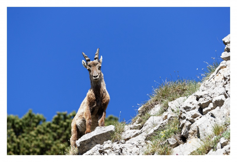 La faune du Pas de l'Aiguille 489236FJ8I4273DXO