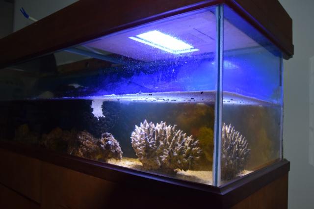 Le nouveau bac du Poissonpané : aquaterrarium de 900L / Nouvelle Calédonie 489389DSC0001