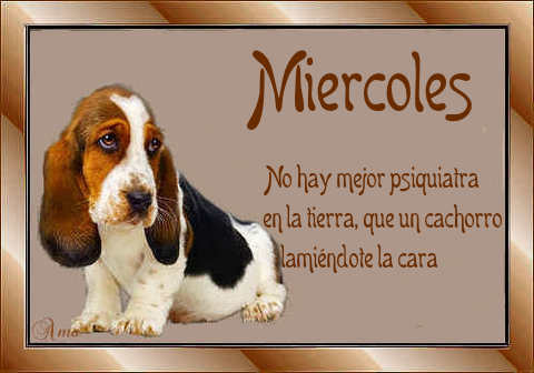 Batata con Frase 492187moercpes