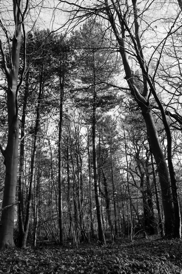 [fil ouvert] la forêt dans tous ses états - Page 17 493266011Copier